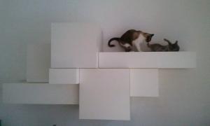 Katzenkampf