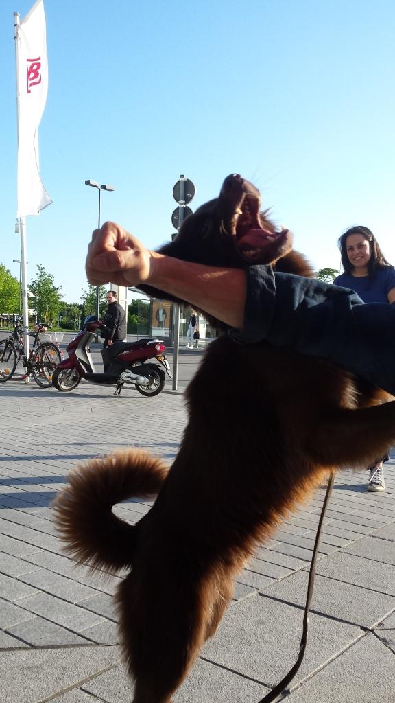 Gonzo beisst in den Arm vom Unterfranken