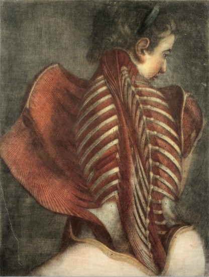 L0019727 Muscles of the back: partial dissection of a seated woman,