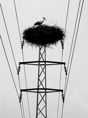 360px-Stork_nest_on_power_mast